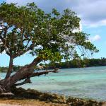 dominican-republic-tree-on-beach