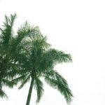 green-palm-tree-miami-beach