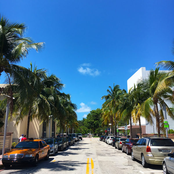 miami-beach-street-palm-trees